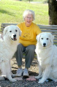 Kuvasz make wonderful Therapy Dogs. Photo courtesy KCA.