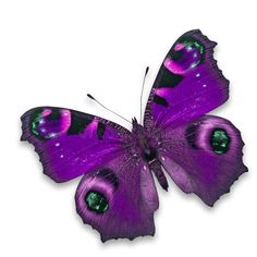 Photo about Beautiful pink butterfly isolated on white background. Image of beauty, purple, insect - 46588672 Fabric Butterfly, Butterfly Pictures, Butterfly Painting, Butterfly Watercolor, Butterfly Crafts, Purple Butterfly, Pink Butterfly, Butterfly Mobile, Paper Butterflies