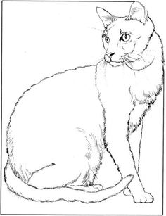 cat34 Cats coloring pages for teens and adults  Favorite Cat