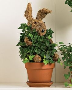 Rabbit topiary, all the bunny needs now  is a beautiful ribbon
