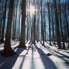 Monti simbruini di inverno nello specifico valle magliula #roma51 #scout #ase #riparto #riparto #gita #escursione #neve #bosco #foresta #alberi