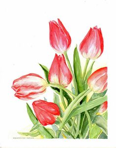 Red tulips spring flowers original  watercolor door AquarellesNature