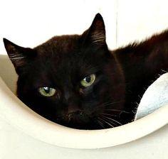 horus, chat, né en 2003, spa salon de provence (13)