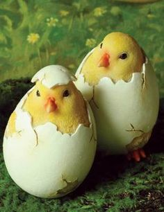"""""""Hello World"""": Birth of the Butterballs    Precious, plump chicks  emerge from their shells in adorable form. Hand painted figurals will induct Spring and induce smiles. 4"""". Set of 3."""