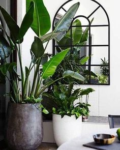 10 Excellent Ideas To Display Living Room Indoor Plants Indoor plants decoration makes your living space more comfortable, breathable and luxurious. An Indoor plant is a houseplant that grows indoors at residences and offices. Plantas Indoor, Room Deco, Jungle Decorations, House Decorations, Decoration Plante, Leaf Decoration, Interior Plants, Botanical Interior, Plant Decor