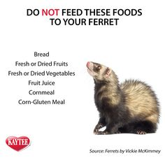Do NOT feed these foods to your pet ferret. Remember to always check with your vet before feeding any new foods to your pet. This list among other foods can be harmful to ferrets.