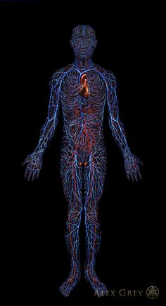 Cardiovascular System by Alex Grey Oil On Linen, 84 x 46 In. Alex Grey, Alex Gray Art, Grey Art, Sacred Geometry Tattoo, Medical Art, Circulatory System, Medical Illustration, Anatomy And Physiology, Process Art