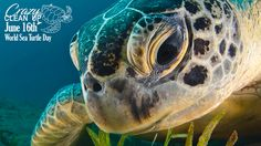 "Happy #worldseaturtleday 🐢 ""Try to be like the turtle - at ease in your own shell Bill Copeland "" Call us today for information and pricing about our services at (951)365-5285 for online booking visit our website www.crazycleanup.com"