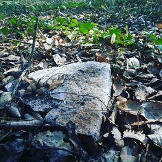 Esta pedra, meio enterrada, eu ja a vejo neste preciso local, há anos, desde que vivo aqui.  Para que serve esta pedra? Não sei.  Consigo ver utilidade nas coisas todas ali à volta:  Nos meus passos, nos pássaros, nas gerações de folhas e de sementes… mas na pedra não. Está somente ali.  Então descobri! O que traz o valor a alguma coisa é a mudança, o movimento.  O que traz valor a alguma coisa não é a natureza dessa coisa! É o seu movimento! #ruigabriel #ninhodaságuias