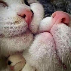 16 Cat Noses Zoomed In That Are Too Cute To Ignore - World's largest collection of cat memes and other animals Pretty Cats, Beautiful Cats, Animals Beautiful, I Love Cats, Crazy Cats, Cool Cats, Funny Cats, Funny Animals, Cute Animals