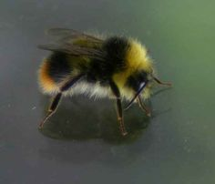 A Love Letter to Honey Bees...