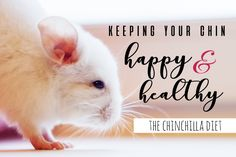 Chinchilla Diet Guide: What do Chinchillas Eat? Healthy Pets, Healthy Life, Hammock Diy, Chinchilla Food, Prevent Bloating, Chinchillas, Closer To Nature, Proper Diet, Pet Store