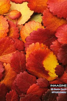 Eye-popping colours of nature! #colours #colors #nature #texture View more here http://bit.ly/1xuyDlB