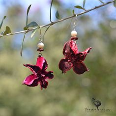 Earrings made from natural elements (nuts, dried flowers,...) by Frutti Antichi, Sicilian designer #madeinsicily | more info at https://www.facebook.com/FruttiAntichi.sicily