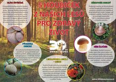 5 houbiček z našich lesů pro zdravý život - 30ti denní výzva