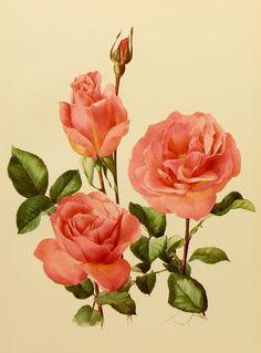 Tiffany pink rose