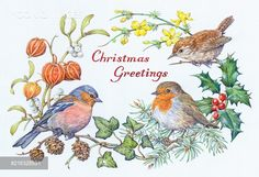 Yooniq images - Chaffinch, wren and robin with holly, ivy etc