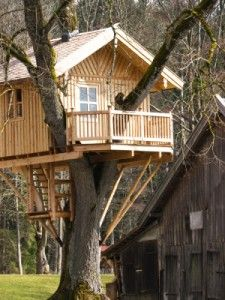 tree house basocs | have you ever thought of building a tree house in your yard for your ...