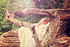 newborn baby framed by tree limbs. tamra horner photography