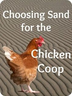 Using Sand in the Coop - It stays where you put it, keeps the water dishes clean, provides manicures for your chickens...  Need more reasons to choose sand?  Check out this article! | The 104 Homestead: Using Sand in the Coop - It stays where you put it, keeps the water dishes clean, provides manicures for your chickens...  Need more reasons to choose sand?  Check out this article! | The 104 Homestead