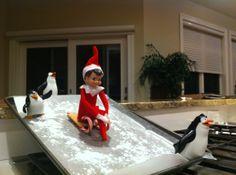 Elf on the Shelf : Sledding!