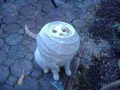 Cat Stuck - 24 very funny photos showing what cats do when home alone - in a box, jar, the blinds or even a sock - cute and funny photos for cat lovers! Pretty Cats, Cute Cats, Funny Cats, Funny Animals, Cute Animals, Animal Funnies, Pretty Kitty, Funny Picture Quotes, Funny Photos