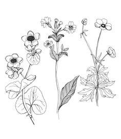 flower sketch fine line - Google Search: