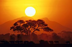 Amboseli Masai Cattle Sunset by Eamon Gallagher on 500px