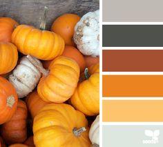 pumpkin palette