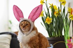 I'm going to smell the Easter flowers.
