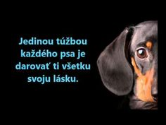Poems, Humor, Dog, Quotes, Quotations, Humour, Poetry, A Poem, Moon Moon