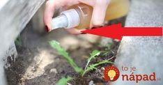 Toto je dôvod, pre ktorý by ste mali mať jablčný ocot vždy poruke! Gardening, Lawn And Garden, Horticulture