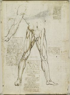 Leonardo da Vinci, 1452-1519, Italian, The muscles of the leg, c.1510-11.  Pen and ink with wash, over black chalk.  Royal Collection Trust, Windsor.