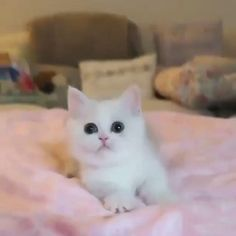 : #cat #catlover #catlovers Cute Little Kittens, Cute Baby Cats, Cute Little Animals, Cute Funny Animals, Kittens Cutest, Cute Dogs, Ragdoll Kittens, Tabby Cats, Funny Kittens
