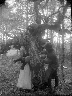 A child is drawn through a hole in a tree to recover from rickets. This image is from Uppland in Sweden, 1918. The same folk remedy was used in Denmark and in the rest of Europe as well. Those healing trees might also gout, gland-disease, boils, epilepsy, hernia. and other diseases.