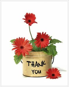Floral Thank You Red Gerbera Daisy Flowers Postcard