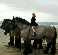 Big horses love us all but especially children. Big Horses, Work Horses, Cute Horses, Pretty Horses, Horse Love, Beautiful Horses, Animals Beautiful, Zebras, Animals And Pets