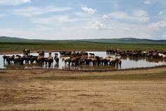 20 DAYS IN MONGOLIA – BACK TO BASICS TRAVEL