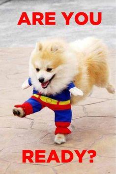 SUPER DOGGG    http://sphotos-a.xx.fbcdn.net/hphotos-snc7/599094_10151165343594823_1289859134_n.jpg