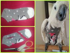 pattern for a sock buddy for a parrot - Google Search