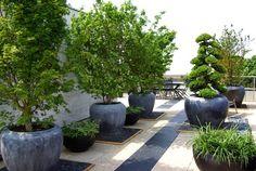 Small Backyard Gardens, Rooftop Garden, Balcony Garden, Hillside Garden, Garden Trees, Landscaping Jobs, Front Yard Landscaping, Penthouse Garden, Small Garden Inspiration