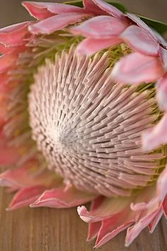 The king of all the flowers, pink king protea. Flor Protea, Protea Art, Protea Flower, Exotic Flowers, Amazing Flowers, Beautiful Flowers, Art Floral, Sugar Flowers, Pink Flowers