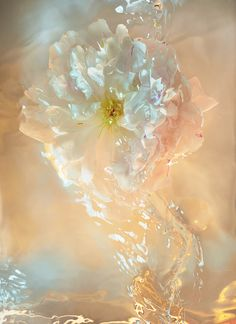 Still life photographer Candice Milon - Flower under water with ligh reflection - perfume image - pyramide olfactive #water #flower