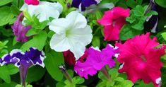 15 plantas para llenar tu hogar de energía positiva (y belleza)