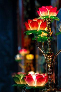 gorgeous lotus lights