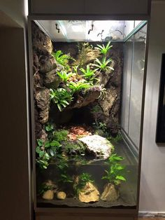 New Pics Reptile Terrarium waterfall Tips There isn't any doubt that will using a furry friend brings untold happiness to help somebody's life. Frog Habitat, Gecko Habitat, Reptile Habitat, Reptile House, Reptile Cage, Reptile Enclosure, Terrariums Gecko, Decor Terrarium, Water Terrarium