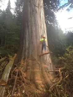 Bucker Bob ... Old West Coast Logging Pictures