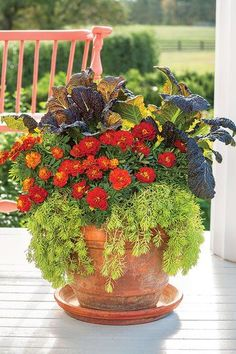 Container Plants For Fall fall container gardening ideas southern living Source: website fall container gardening ideas patio hope Sou. Best Potted Plants, Ivy Plants, Cool Plants, Fall Containers, Succulents In Containers, Container Flowers, Fall Container Plants, Garden Container, Container Architecture