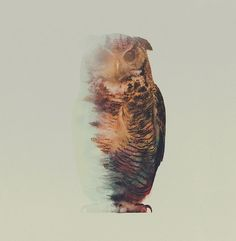 30+ Awesome Multiple Exposure Animal Photography Ideas
