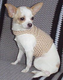 Small dog sweater pattern - my 3 babies should be glad I haven't learned to knit...YET!! :)